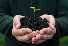 ζωή νέα συντήρησης περιβαλλοντικές αγροτών φρέσκες χεριών εκμετάλλευσης νεολαίες συμβόλων φυτών ζωής νέες Στοκ Εικόνες
