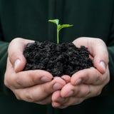 ζωή νέα συντήρησης περιβαλλοντικές αγροτών φρέσκες χεριών εκμετάλλευσης νεολαίες συμβόλων φυτών ζωής νέες Στοκ Φωτογραφίες