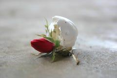 ζωή νέα Στοκ φωτογραφίες με δικαίωμα ελεύθερης χρήσης