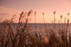 Ζωή νησιών στη Οκινάουα 7 Στοκ φωτογραφίες με δικαίωμα ελεύθερης χρήσης