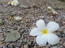 Ζωή λουλουδιών Στοκ εικόνες με δικαίωμα ελεύθερης χρήσης