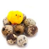 Ζωή Πάσχας ακόμα: αυγό ορτυκιών με το κοτόπουλο Στοκ Εικόνες