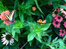 Ζωή πεταλούδων Στοκ Φωτογραφίες