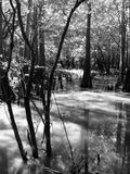 Ζωή ποταμών γραπτή Στοκ φωτογραφίες με δικαίωμα ελεύθερης χρήσης