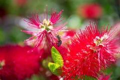 Ζωή σε ένα λουλούδι Στοκ φωτογραφίες με δικαίωμα ελεύθερης χρήσης
