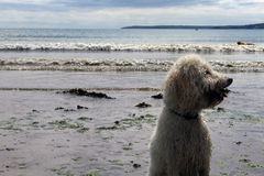 ζωή σκυλιών Στοκ Φωτογραφίες