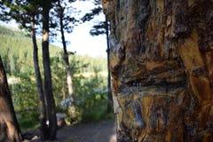 Ζωή στα ξύλα Στοκ φωτογραφίες με δικαίωμα ελεύθερης χρήσης
