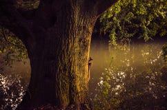 Ζωή στα ξύλα Στοκ φωτογραφία με δικαίωμα ελεύθερης χρήσης