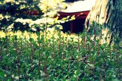 Ζωή του ναού Στοκ φωτογραφίες με δικαίωμα ελεύθερης χρήσης