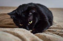 Ζωή των γατών και των ανθρώπων στο μοντέρνο κόσμο στοκ εικόνα με δικαίωμα ελεύθερης χρήσης