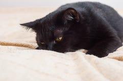 Ζωή των γατών και των ανθρώπων στο μοντέρνο κόσμο στοκ εικόνες με δικαίωμα ελεύθερης χρήσης