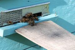 Ζωή των μελισσών Μέλισσες εργαζομένων Οι μέλισσες φέρνουν το μέλι Στοκ Εικόνα