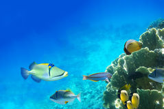 ζωή υποβρύχια στοκ εικόνα