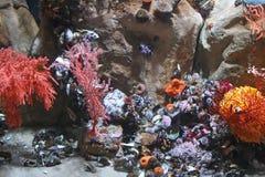 ζωή υποβρύχια Στοκ Εικόνες
