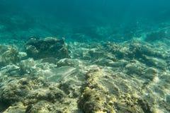 ζωή υποβρύχια Στοκ φωτογραφία με δικαίωμα ελεύθερης χρήσης