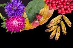 Ζωή φθινοπώρου ακόμα με τα μούρα και το σμέουρο του Rowan σε ένα μαύρο BA Στοκ Φωτογραφίες