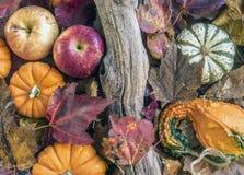 ζωή φθινοπώρου ακόμα στοκ φωτογραφίες με δικαίωμα ελεύθερης χρήσης