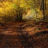 Ζωή φθινοπώρου ακόμα Στοκ φωτογραφία με δικαίωμα ελεύθερης χρήσης