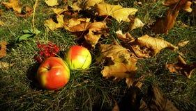 ζωή φθινοπώρου ακόμα Στοκ Εικόνες