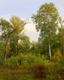 Ζωή φθινοπώρου στη φύση Στοκ Εικόνες