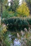 Ζωή φθινοπώρου στη φύση Στοκ Εικόνα