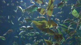 Ζωή ψαριών και εγκαταστάσεων απόθεμα βίντεο