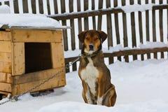 ζωή s σκυλιών Στοκ Εικόνες