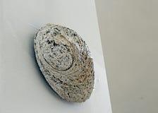 Ζωή Stil με το φυτώριο Shell στο άσπρο κλίμα Στοκ εικόνες με δικαίωμα ελεύθερης χρήσης