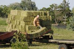 Ζωή USA_farmer Στοκ εικόνα με δικαίωμα ελεύθερης χρήσης