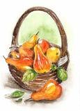 Ζωή Watercolor ακόμα με ένα καλάθι των αχλαδιών ελεύθερη απεικόνιση δικαιώματος