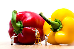 Ζωγράφοι που χρωματίζουν το πιπέρι κουδουνιών Μακρο φωτογραφία Στοκ Εικόνες