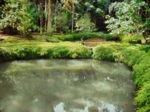 Ζωγραφική μιας λίμνης και των δέντρων απεικόνιση αποθεμάτων
