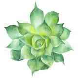 Ζωγραφική Sukkulent Watercolor Στοκ φωτογραφίες με δικαίωμα ελεύθερης χρήσης