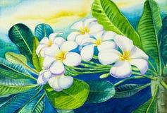 Ζωγραφική Watercolor αρχική σε χαρτί ζωηρόχρωμο των άσπρων λουλουδιών plumeria διανυσματική απεικόνιση