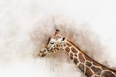 Ζωγραφική Watercolor ενός antiquorum camelopardalis Giraffa γνωστού επίσης ως της Κεντρικής Αφρικής giraffe ελεύθερη απεικόνιση δικαιώματος