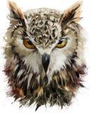 Ζωγραφική watercolor κουκουβαγιών απεικόνιση αποθεμάτων