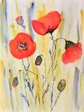 Ζωγραφική Watercolor, παπαρούνες στοκ εικόνες με δικαίωμα ελεύθερης χρήσης