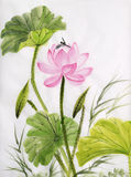Ζωγραφική Watercolor του λουλουδιού λωτού Στοκ φωτογραφίες με δικαίωμα ελεύθερης χρήσης