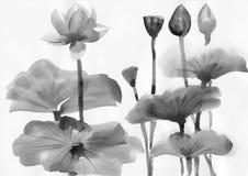 Ζωγραφική Watercolor των λουλουδιών λωτού Στοκ Εικόνες