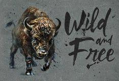 Ζωγραφική watercolor Buffalo με το υπόβαθρο, την άγρια και ελεύθερη τυπωμένη ύλη άγριας φύσης βισώνων για την μπλούζα απεικόνιση αποθεμάτων
