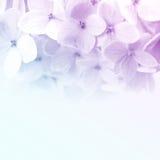 Ζωηρά λουλούδια χρώματος στο μαλακό και ύφος θαμπάδων στη σύσταση εγγράφου μουριών Στοκ εικόνα με δικαίωμα ελεύθερης χρήσης