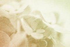Ζωηρά λουλούδια χρώματος στο μαλακό και ύφος θαμπάδων στη σύσταση εγγράφου μουριών Στοκ Εικόνες