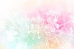 Ζωηρά λουλούδια χρώματος στο μαλακό και ύφος θαμπάδων στη σύσταση εγγράφου μουριών Στοκ εικόνες με δικαίωμα ελεύθερης χρήσης