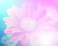 Ζωηρά όμορφα άγρια λουλούδια χρώματος στο μαλακό ύφος Στοκ Φωτογραφίες