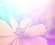 Ζωηρά όμορφα άγρια λουλούδια χρώματος στο μαλακό ύφος Στοκ φωτογραφία με δικαίωμα ελεύθερης χρήσης