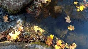 Ζωηρή πτώση φύλλων χρώματος στο νερό ρευμάτων ποταμών μεταξύ των βράχων φιλμ μικρού μήκους