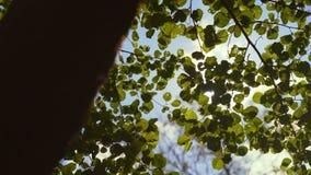 Ζωηρός και φωτεινός ήλιος που θέτει πίσω από τη γραμμή δέντρων στην αγριότητα HD Slowmo απόθεμα βίντεο