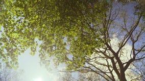 Ζωηρός και φωτεινός ήλιος που θέτει πίσω από τη γραμμή δέντρων στην αγριότητα HD Slowmo φιλμ μικρού μήκους