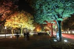 Ζωηρόχρωμα δέντρα τη νύχτα Στοκ φωτογραφίες με δικαίωμα ελεύθερης χρήσης