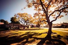 Ζωηρόχρωμα δέντρα του φθινοπώρου Στοκ Εικόνες
